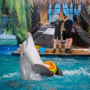 Дельфинарии, океанариумы Нахабино