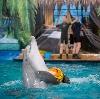 Дельфинарии, океанариумы в Нахабино