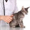 Ветеринарные клиники в Нахабино